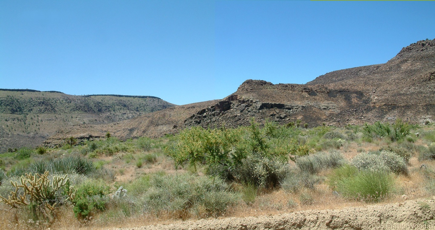 Hackberry Fire Complex, Wild Horse Canyon, Mojave National Preserve, San Bernardino County, California.